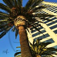 Santa Monica Palm Tree View