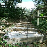 Belize Howler Monkey Walk Stairs
