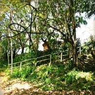 Belize Howler Monkey Resort View