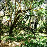 Belize Howler Monkey Sanctuary View