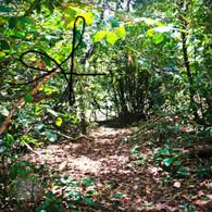Belize Howler Monkey Walk Path