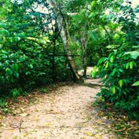 Belize Howler Monkey Path into Jungle