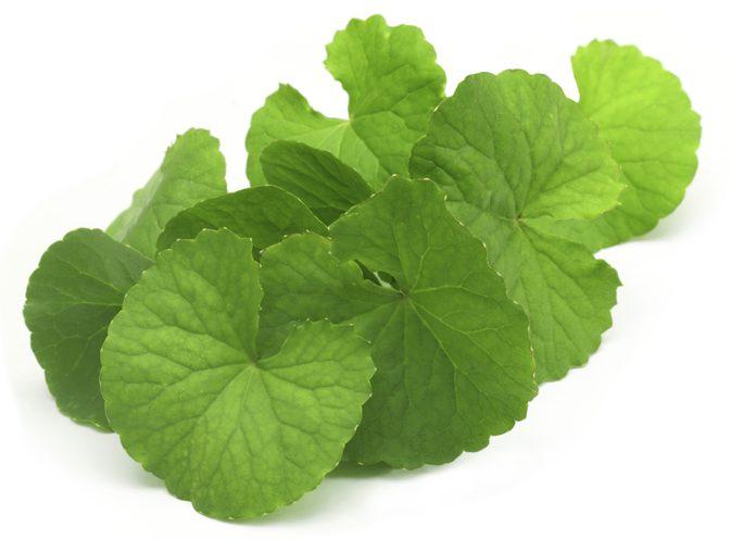brahmi-leaves.jpg