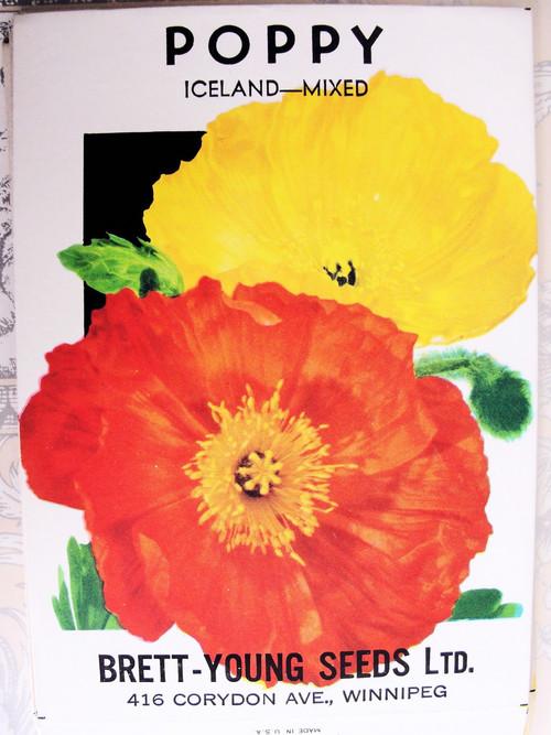 Vintage Seed Packet Iceland Poppy