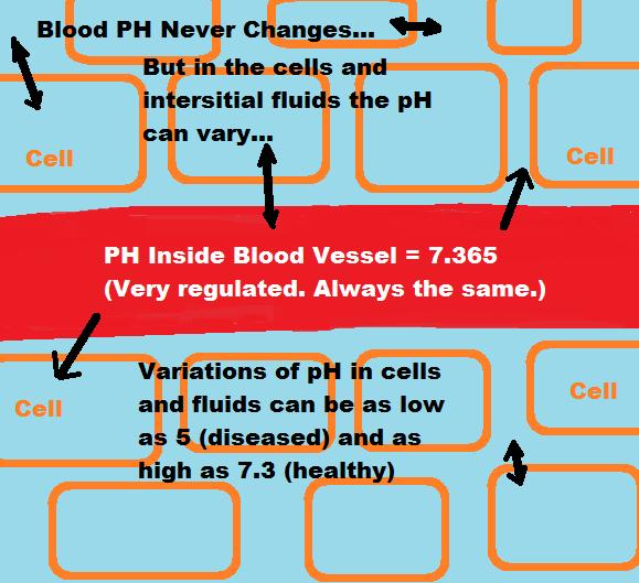 blood-ph-regulation-illustration.png