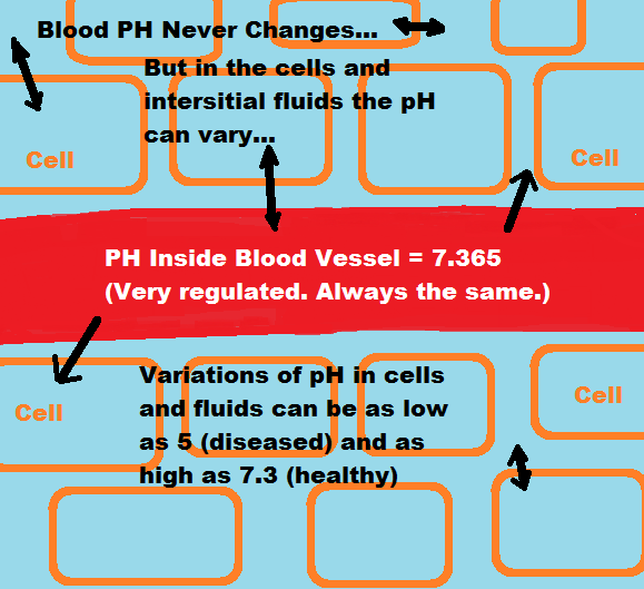 blood-ph-regulation-illustration