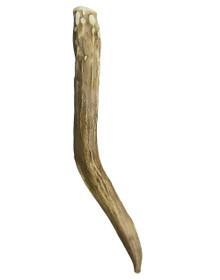 Horn Kilt Pin