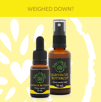 Lighten Up, Buttercup Flower Essence plus Flower Essence Mist to promote positivity, optimism and lightheartedness