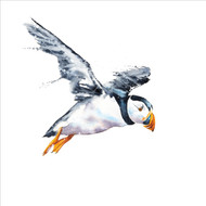 RT84845 - Puffin (6 blank cards)