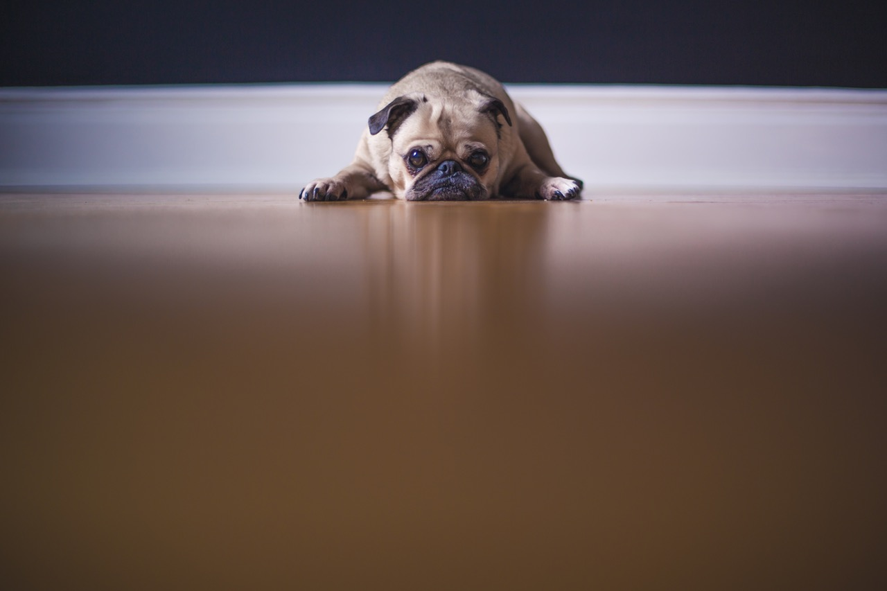 how-to-get-rid-of-dog-smell