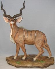 Greater Kudu 50023