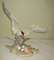 Royal Tern 40288