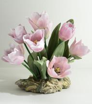 Parrot Tulips (F510)