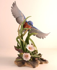 Eastern Bluebird 400-51