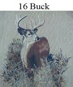 16 Buck