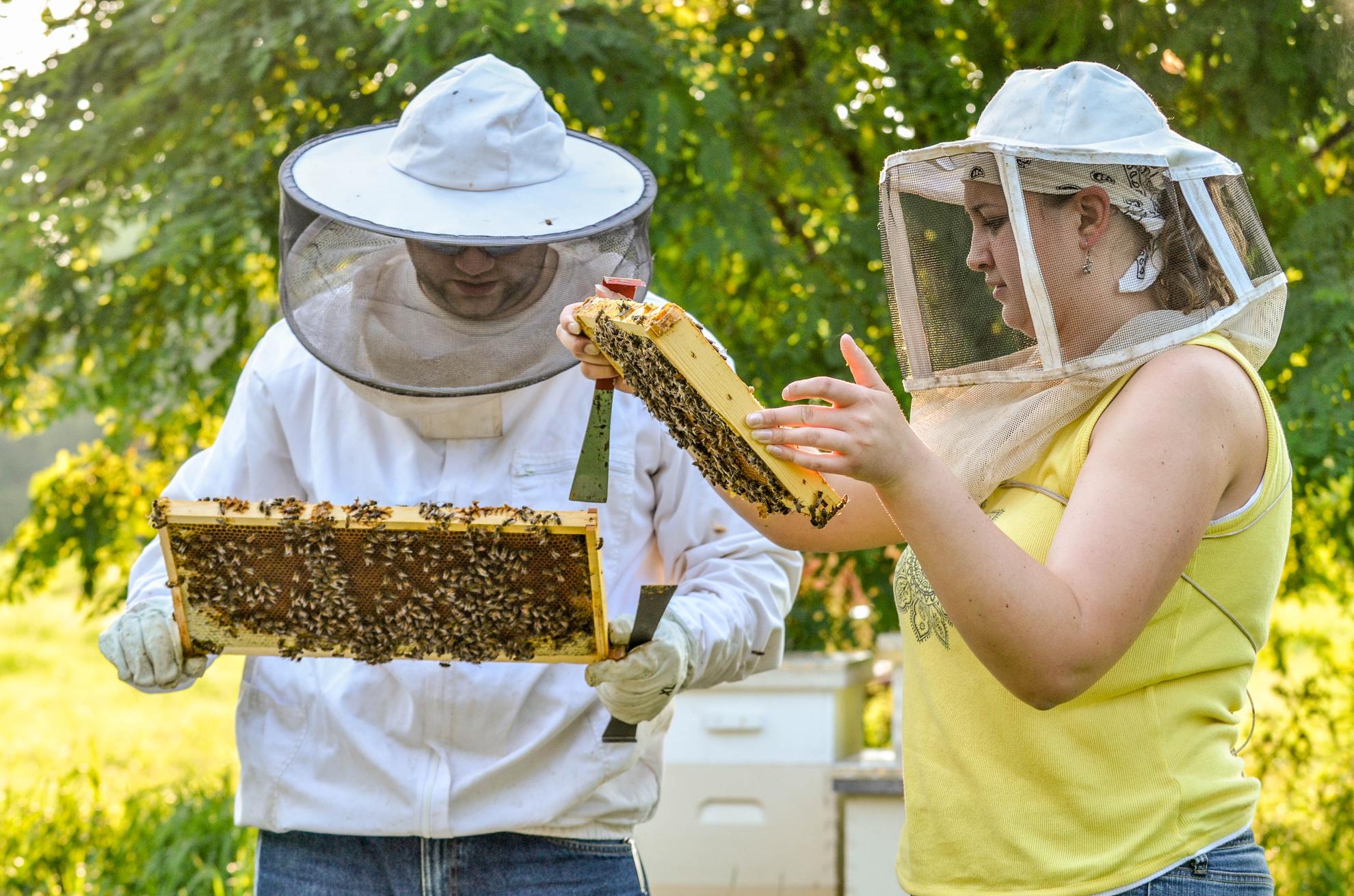 538199-ny-can-bee2.jpg