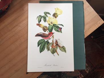 Brazilian Bird Print, 31