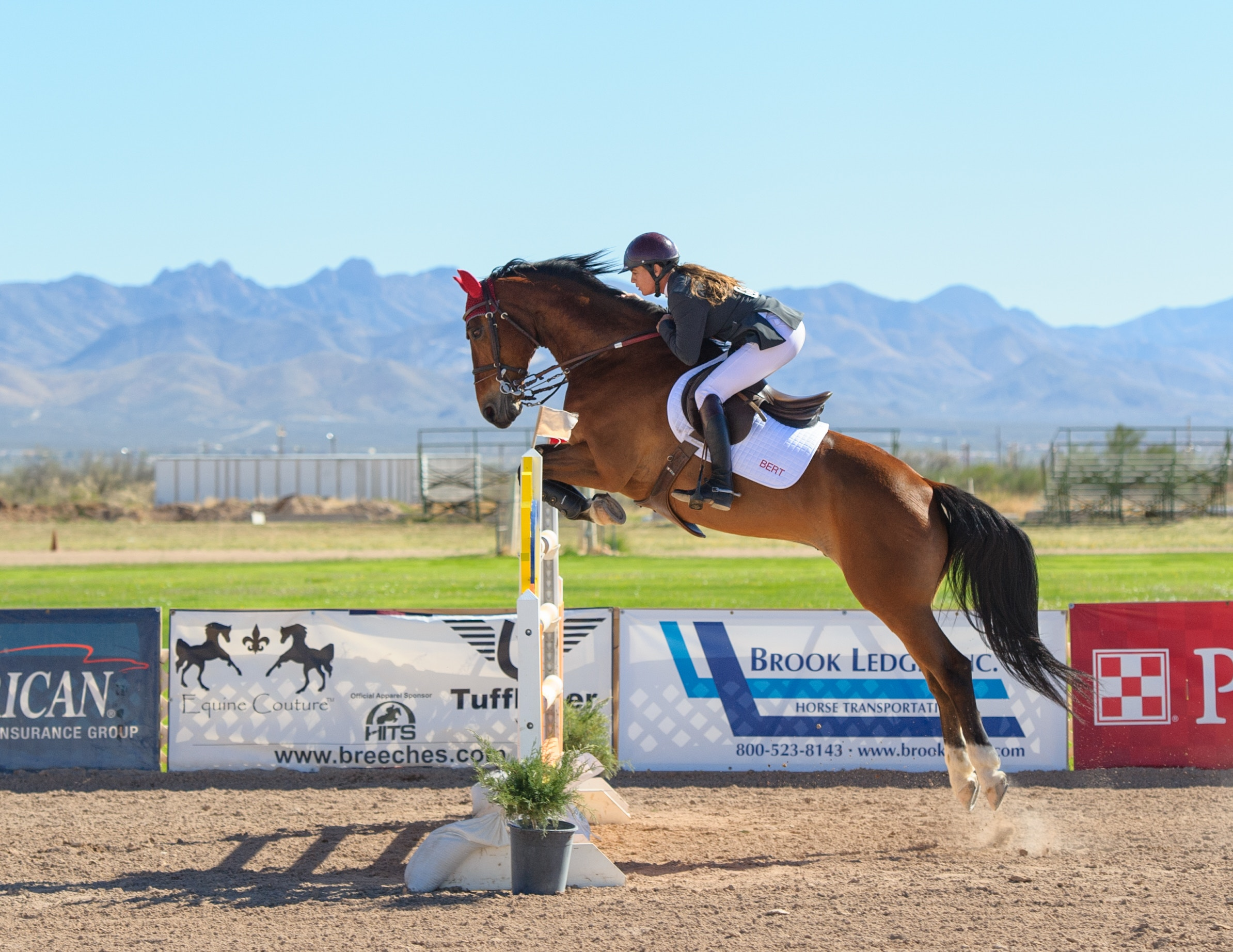 Show Jumping Rider in Competition on Medium Brown Horse