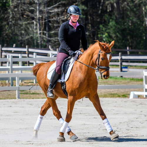 Arenus - Shop Canine & Equine Nutrition Products & Liniments