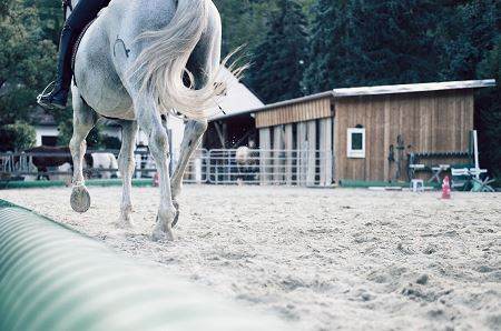 Equestrian Riding White Horse in Arena