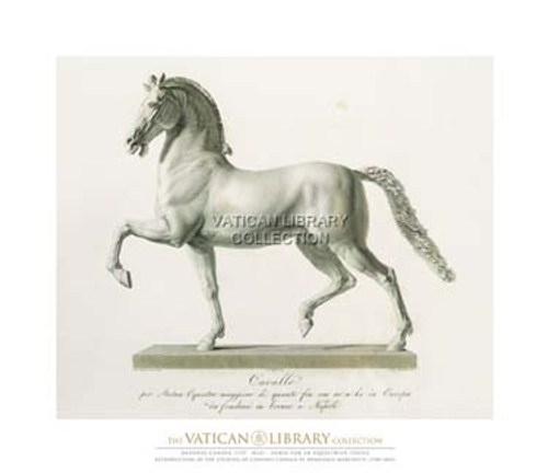 Horse for an Equestrian Statue #1