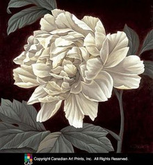 Full Bloom I (27.5 x 27.5) Art Print - Keith Mallett
