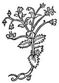 Knotgrass  1/2 oz