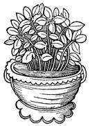 Basil Leaf, Cut   1/2 oz