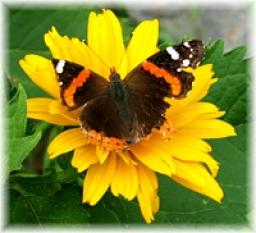 butterfly-on-flower.jpg