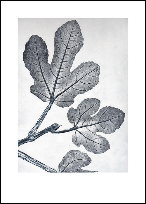"""Modern Scandinavian Print - Fig Bluegrey - 19.75"""" x 27.5"""""""
