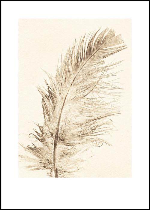 "Modern Print - Feather Gold - 19.75"" x 27.5"""