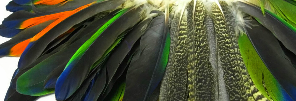 cruelty free feathers moonlight feather