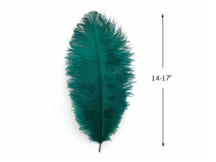 "10 Pieces - 14-17"" Teal Green Ostrich Dyed Drab Body Feathers"