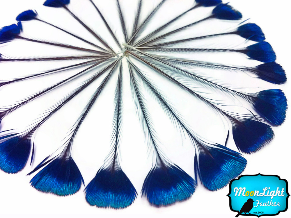 peacock feathers for sale moonlight feather