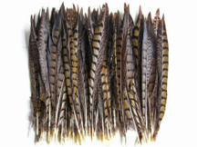 "10 Pieces - 6-8"" Natural Lady Amherst Pheasant Tail Feathers"