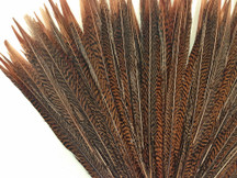 "10 Pieces - 8-10"" Natural Golden Pheasant Tail Feathers"