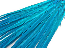 "50 Pieces - 20-22"" Turquoise Blue Long Ringneck Pheasant Tail Wholesale Feathers (Bulk)"