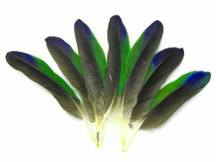 4 Pieces - Tri-Color Amazon Parrot Wing Feathers -Rare-