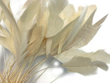 1 Dozen - Ivory Stripped Rooster Coque Tail Feathers