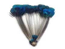 1 Bunch - BLUE Iridescent Peacock Whole Crown / Corona Feather