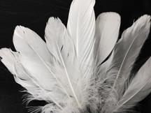 1/4 Lb - White Goose Satinettes Wholesale Loose Feathers (Bulk)