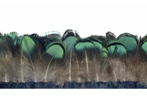 1 Yard - Green Bronze Lady Amherst Pheasant Tippet Feather Fringe