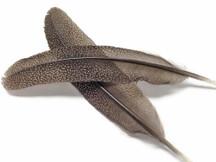 1 Pair - Polka Dot Grey Peacock Pheasant Wing Feather