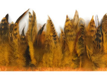1 yard - GOLDEN YELLOW Chinchilla Rooster Schlappen Feather Trim