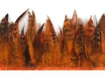 1 Yard - Pumpkin Chinchilla Rooster Schlappen Feather Trim