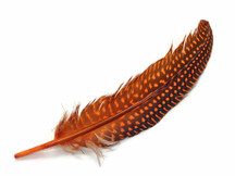 10 Pieces - Orange Polka Dot Guinea Fowl Wing Quills Feathers
