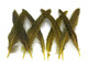 Yellow dyed spotted quill tip feathers