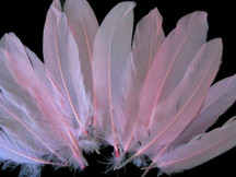 Baby Pink Goose Satinettes Wholesale Loose Feathers (Bulk)