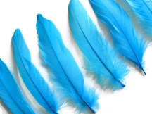 Bright blue medium sized craft feathers
