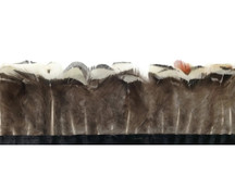 1 Yard - White Lady Amherst Pheasant Plumage Feather Trim